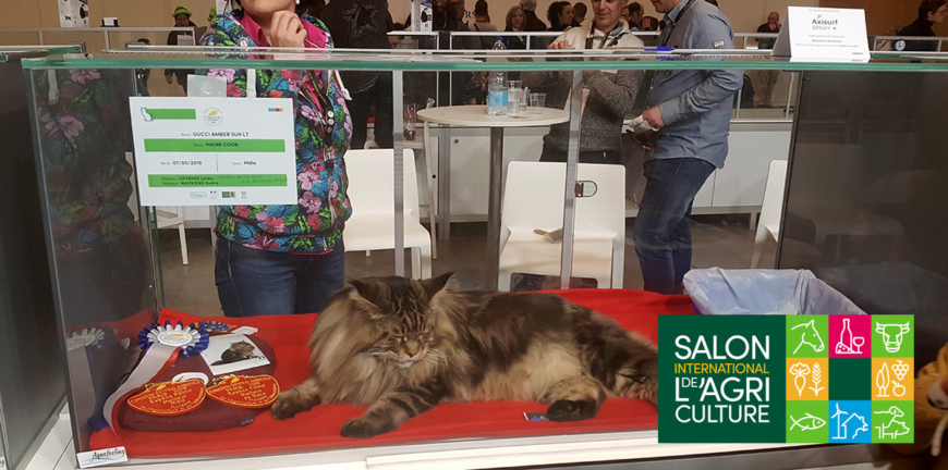 Salon International de l'Agriculture 2019 - PetsCool