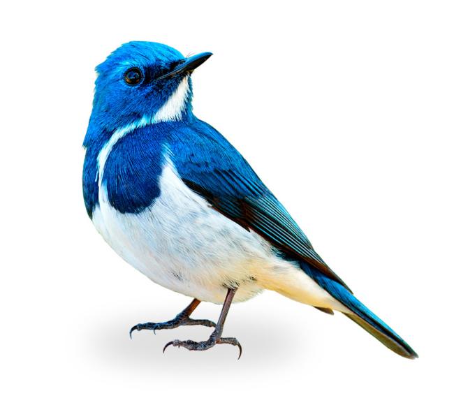 https://anidev.fr/wp-content/uploads/2019/02/oiseau-contact-650x590.jpg