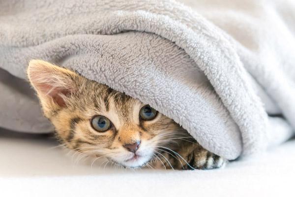 hospitalisation d'un animal et le stress
