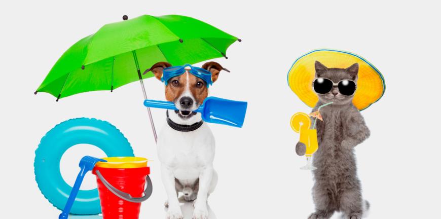 PetsCool vacances