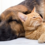 PetsCool et le stress de vos animaux en période de confinement