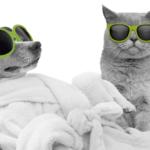 Anidev fait évoluer le packaging PetsCool